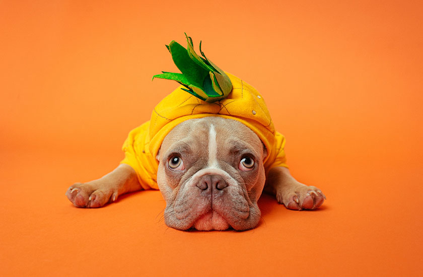 Join us for Howl-O-Ween on the Healdsburg Square!